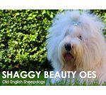 Shaggy Beauty