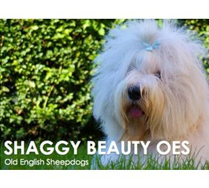 Shaggy Beauty
